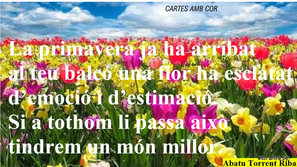 Abatu, Cistella (2)
